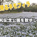 【ネモフィラを見に】昭和記念公園に行ってみた
